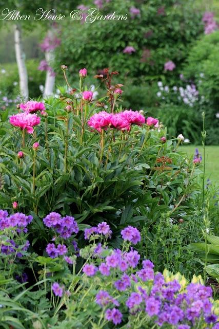 My favorite flower bed    Aiken House & Gardens