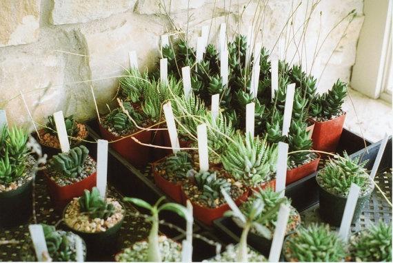 cactus print by eveneve.
