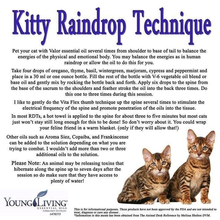 temptations cat treat commercial