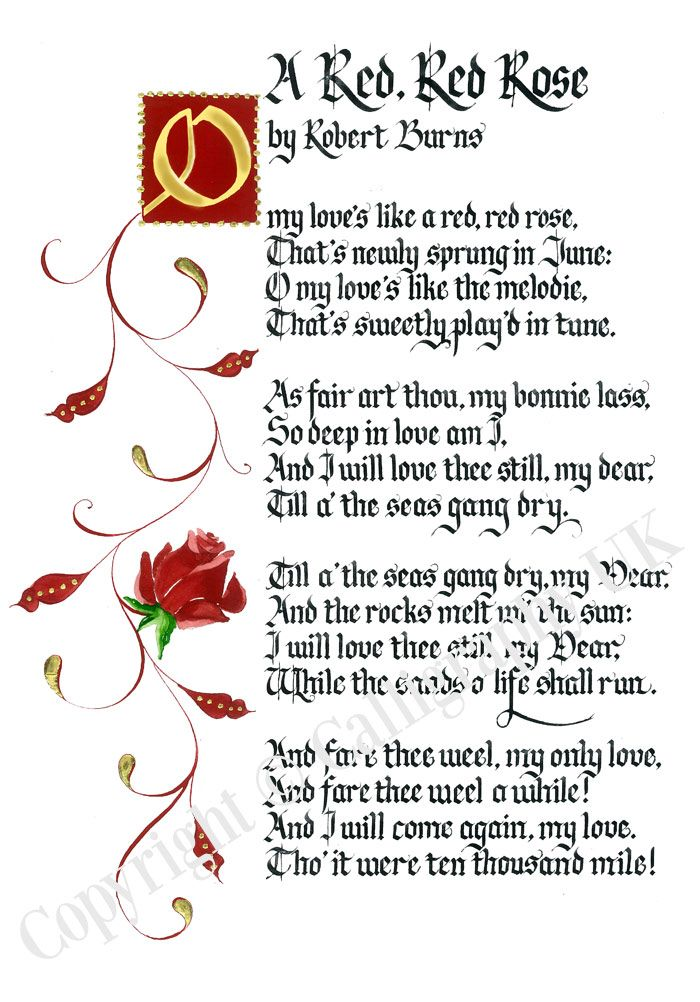 robert burns a red red rose essay