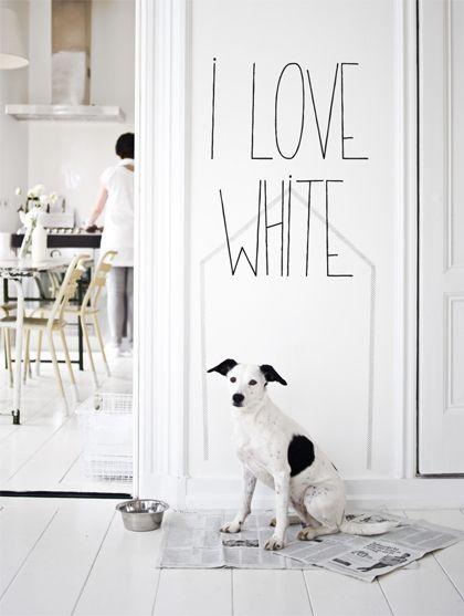 ♥ I love #white | #dog #interiors