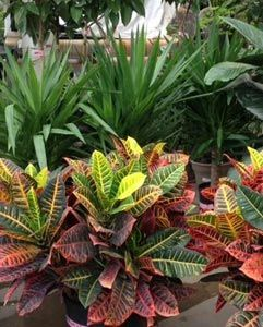 Pin by holland park garden gallery on tropical plants for Low maintenance green plants