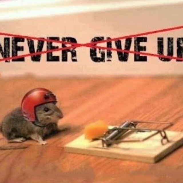 essays on giving up Free essay: you just never give up no matter how hard it is stay true to yourself and don't follow bad company take my stupid advice and obey your elders.