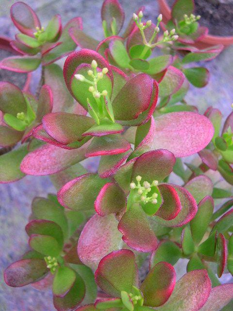 Fotografije kaktusa - Page 3 2f33bdb3bc4a2ba38e1c905a5a4d8408
