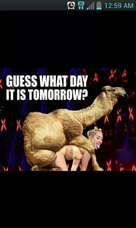 Hump Day Camel Miley Cyrus Miley Cyrus hum...