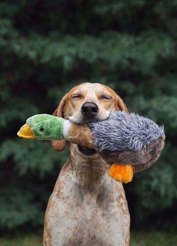 (via happy pup | f u r r y - f r i e n d s | Pinterest)