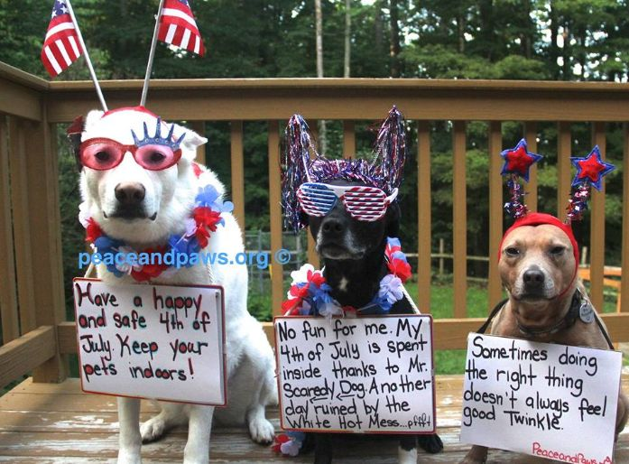 july 4th dog pictures