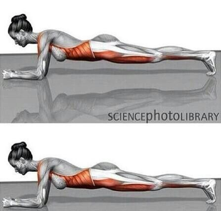 Planks targeted muscle groups | Health & fitness | Pinterest