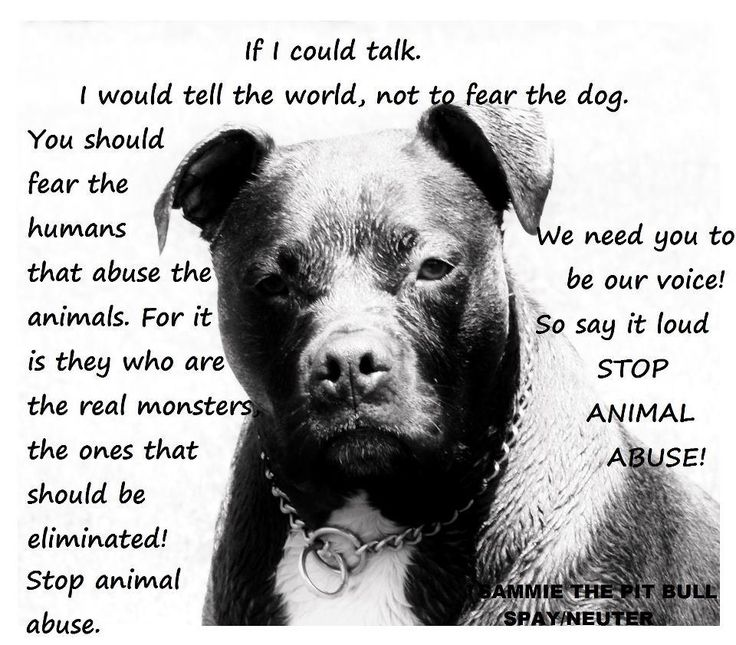 Don't believe the hype! If you need to hate someone, hate the people who force dogs to fight.
