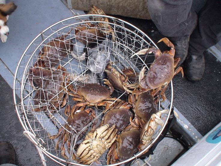 Dungeness crab fishing in ketchikan alaska pinterest for Dungeness crab fishing
