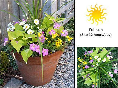 Full sun container gardening pinterest - Container gardens for sun ...