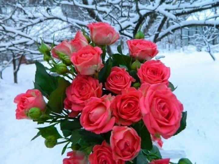 red valentine rose maplestory price