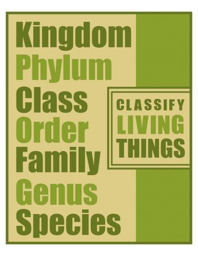 ... : Kingdom, Phylum, Class, Order, Family, Genus and Species. 8x10 $5