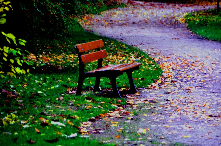 autumn leaves on bench - photo #22