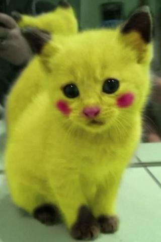 Pika , Pika , Cat?! | Too Cute ! | Pinterest