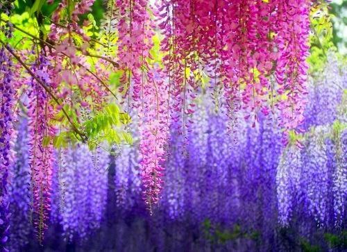 wisteria multi color - Pixdaus. Love this color for rooms accents.