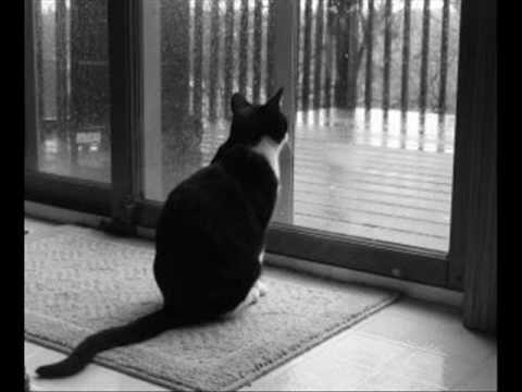 letra de la gata bajo la lluvia de rocio: