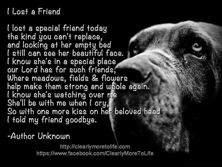 Quotes For A Best Friend Who Has Died : Dog quotes quotesgram