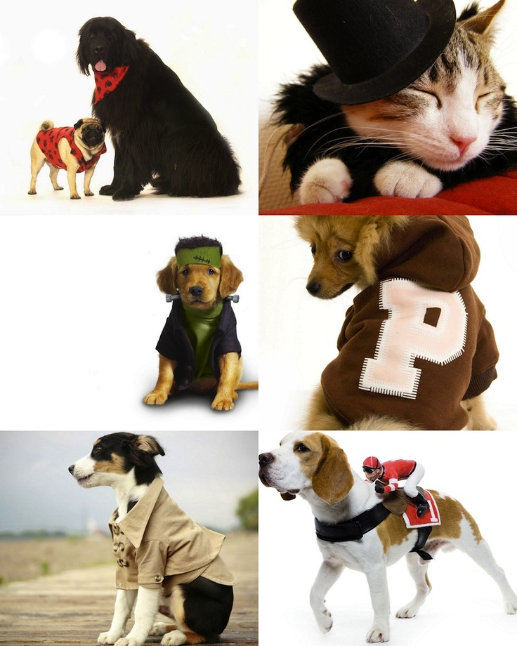 Dog and cat clothing cute for the home pinterest
