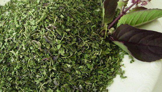 dictionary english vietnamese garlic