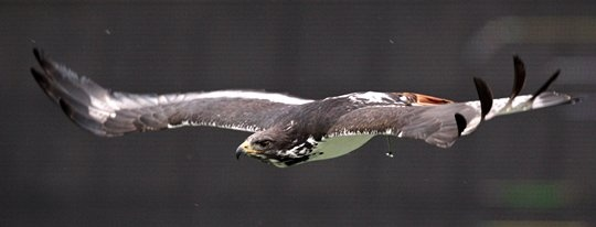 "Awesome pic of ""Taima"" Seahawks team bird! #FavoriteSeahawksPhoto"