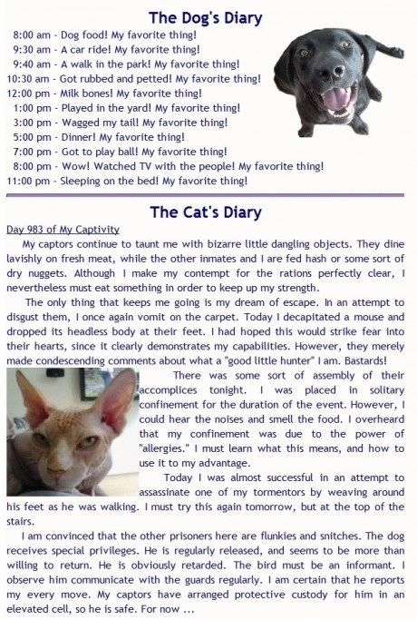 The Cat and Dog's diary.