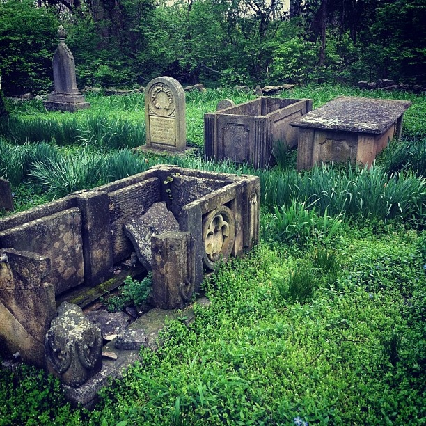 (emetery at grassmere zoo