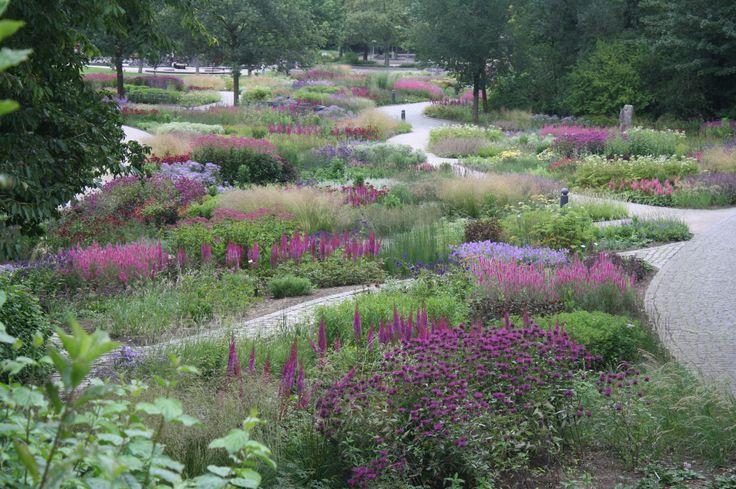 Maxipark piet oudolf piet oudolf pinterest for Piet oudolf private garden