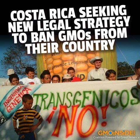 Costa Rica Seeking New Legal Strategy To Ban GMOs From Their Country. More Here: http://voices.yahoo.com/costa-rica-seeking-legal-strategy-ban-gmos-12296263.html