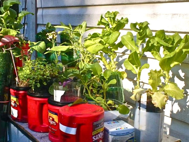 Recycled container garden grow pinterest - Recycled containers for gardening ...