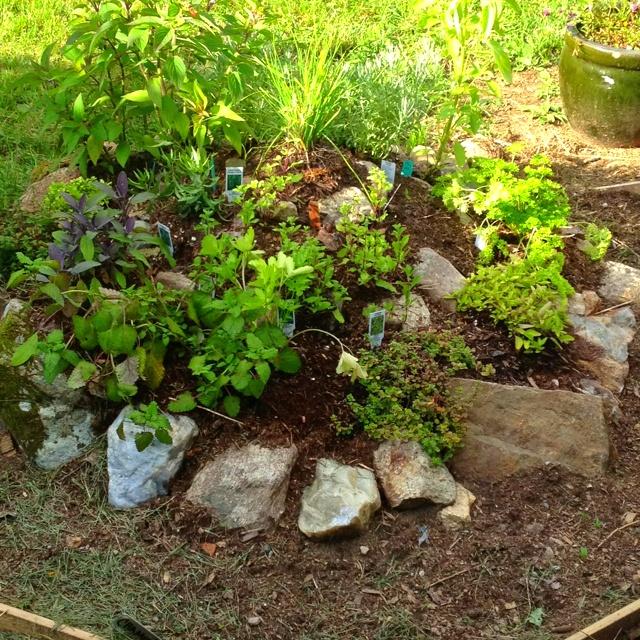 My version of an herb spiral garden