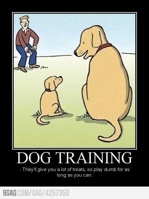 funny dog training cartoon comic | Sayings I Love | Pinterest