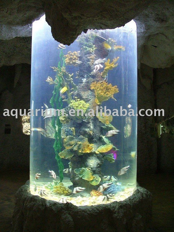 Round fish tanks google search for the home pinterest for Circular fish tank