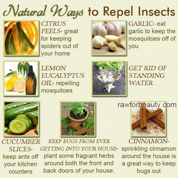 natural ways to repel insects home remedies that