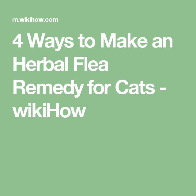 How to Make an Herbal Flea Remedy for Cats