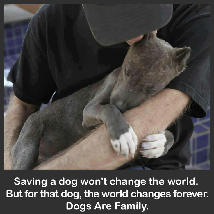 Save a dog, dogs are family