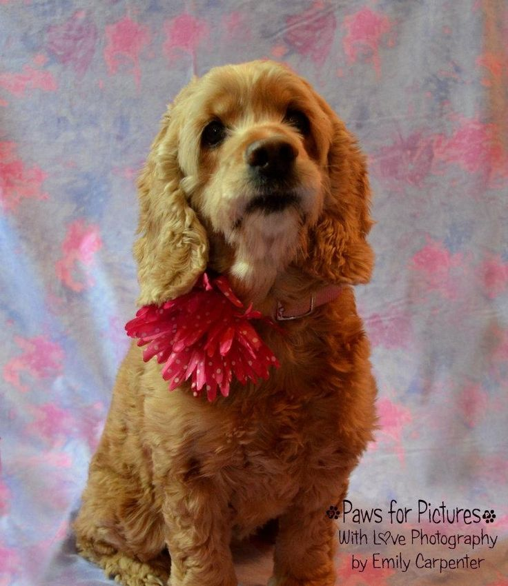 valentine's day pet photos