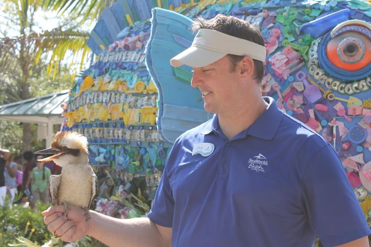 Kookaburra at SeaWorld