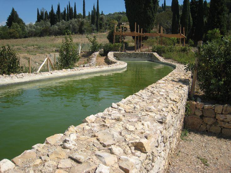 Le bassin de récupération deau du jardin du MIP