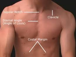 Angle of louis anatomy