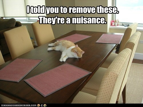 funny cat pictures - I told you to remove these. They're a nuisance.