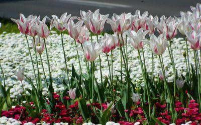 wallpapers of flowers Found on desktopwallpaper4.me | 400 x 250 · 31 kB · jpeg