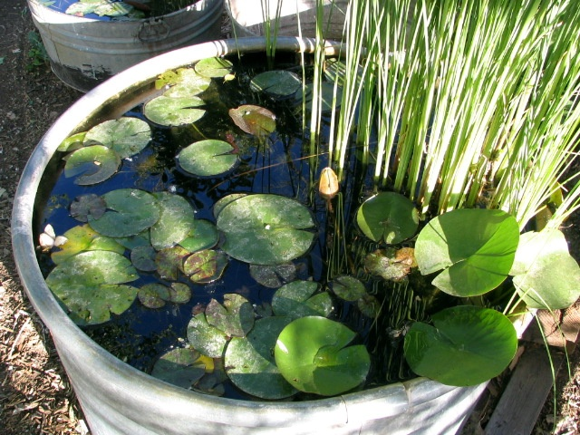 Pin by form and foliage on form and foliage pinterest for Garden pond tub