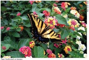 Zone 5 butterfly garden suggestions... I'll be doing some of this for sure!