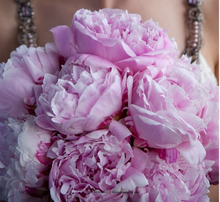 peony flowers for valentines day