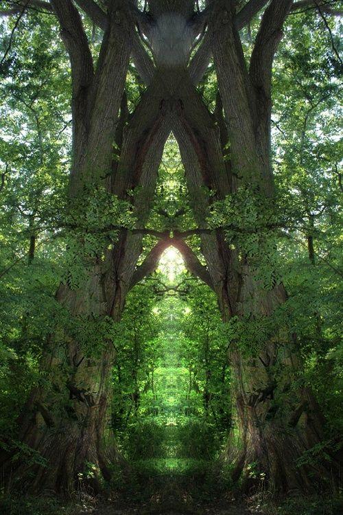 Forest Portal portals and passages Pinterest