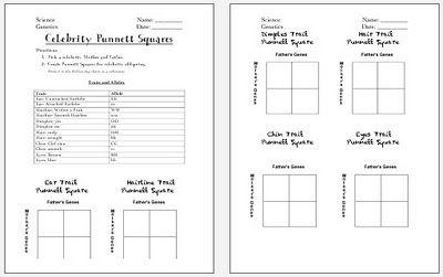 all worksheets punnett squares worksheets printable worksheets guide for children and parents. Black Bedroom Furniture Sets. Home Design Ideas