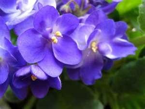 I miss violets.