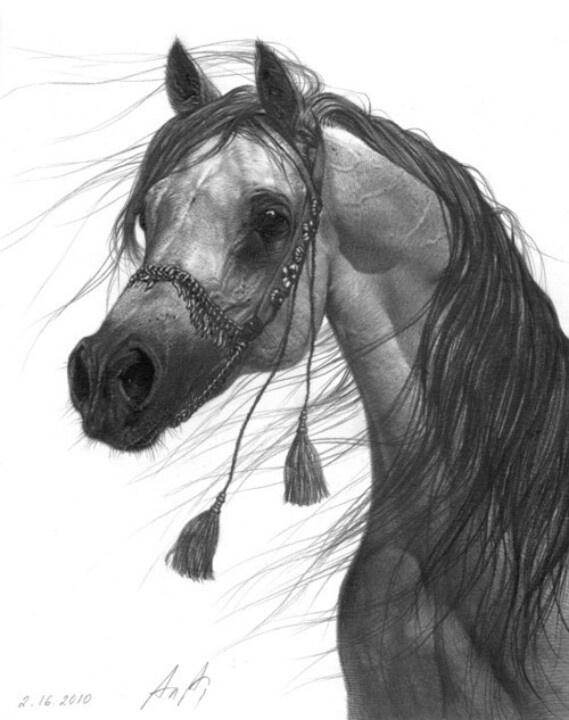 Arabian art | The Majestic Arabian Horse | Pinterest