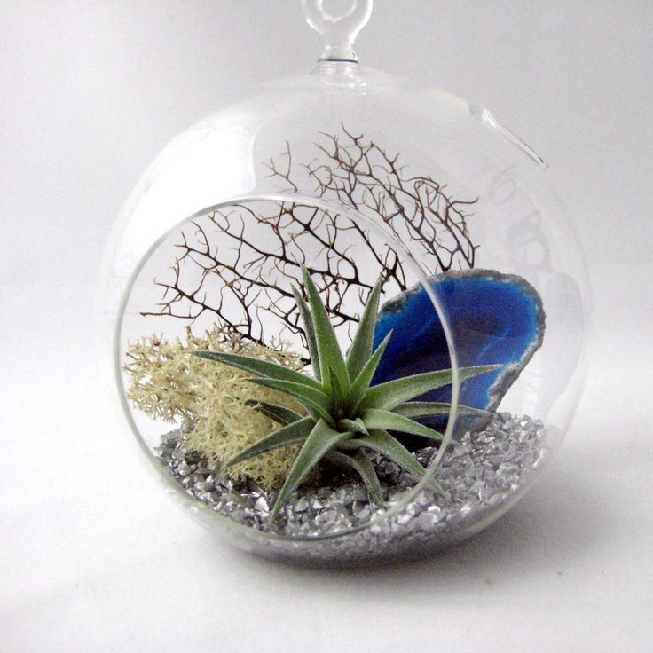 blue agate air plant terrarium air plants pinterest. Black Bedroom Furniture Sets. Home Design Ideas